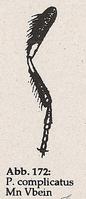 Vorderbein (Mn Platycheirus complicatus)