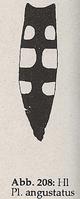 Hinterlein schlank und zugespitzt (Platycheirus angustatus)