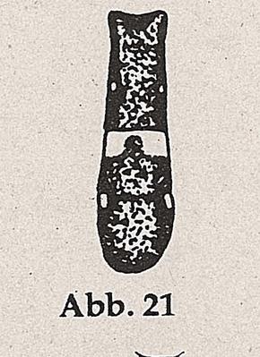 DJN-Schwebfliegen Bothe 1994 Abb.21 Hinterleib parallel.png