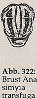 Brust mit Längsstreifen (Anasimyia transfuga)