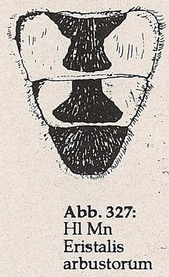 DJN-Schwebfliegen Bothe 1994 Abb.327 Mn Eristalis arbustorum Hl.png