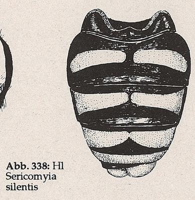 DJN-Schwebfliegen Bothe 1994 Abb.338 Sericomyia silentis Hl.png