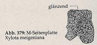Mittlere Brust-Seitenplatte glänzend (Xylota meigeniana)