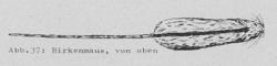 Birkenmaus, von oben - DJN (1994) - Peter Boye - Heimische Säugetiere