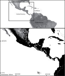Map 6. Map of North, Central and northern South America (inset) showing the distribution of Selenops mexicanus Keyserling (white circles). This species has also been found in various states in the US where it was imported on produce, as well as in St. Maarten, where it was likely imported on a palm. See text for details.