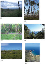 Figures 201–206. Habitats and natural history of some Selenops species. 201 Dry thornscrub and rocky wash where Selenops bifurcatus Banks was extremely common, Zacatan, Guatemala 202 Pine/fern habitat, Abaco, Bahamas where Selenops aissus Walckenaer can be found 203 Dry forest habitat around Laguna Oviedo, Pedernales, Dominican Republic. The species Selenops oviedo sp. n. can be found underneath the rocks 204 Thornscrub habitat, Shirley's Heights Lookout, Antigua, where Selenops kalinago sp. n. can be found under bark 205 Blowing Point, Anguilla, where Selenops souliga sp. n. can be found under limestone rocks in the thornscrub habitat 206 Coastal thornscrub habitat, El Morro, Dominican Republic. Selenops insularis Keyserling can be found under the bark of trees, while Selenops morro sp. n. is more common under rocks.