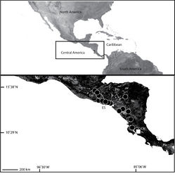 Map 8. Map of Central America (inset) showing the distribution of two species of Selenops in the region. Selenops bifurcatus Banks (black circles) and Selenops oricuajo sp. n. (white square). (Mex= México, Gu=Guatemala, ES=El Salvador, Ho=Honduras, Ni=Nicaragua, CR=Costa Rica, Pa=Panamá).