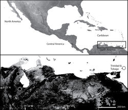 Map 2. Map of Venezuela and Trinidad and Tobago (inset) showing the distribution of Selenops. Selenops geraldinae Corronca (black circles), Selenops willinki Corronca (white circle).
