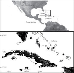 Map 10. Map of southern Florida, the Bahamas, Cuba, Cayman Islands and Turks and Caicos Islands (inset) showing the distribution of four species of Selenops. Selenops aissus Walckenaer (white circles), Selenops simius Muma (black circles), Selenops submaculosus Bryant (black diamonds), Selenops baweka sp. n. (white stars). (FL=Florida, TC=Turks and Caicos Islands).