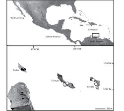 Map 1. Map of Aruba, Curaçao and Bonaire (inset) showing the distribution of Selenops. Selenops arikok sp. n. (black circles), Selenops curazao Alayón-García (white circles).