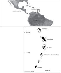 Map 4. Map of Dominica, Martinique, St. Lucia, St. Vincent and the Grenadines and Grenada (inset) showing the distribution of Selenops micropalpus Muma (white circles).