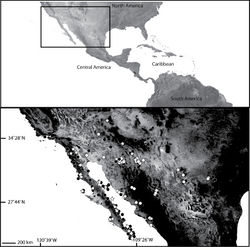 Map 7. Map of North America, including the United States and México (inset) showing the distribution of some members of the Selenops debilis group (sensu Muma 1953), including those than cannot be identified to species (black circles) either because they are juveniles or they have diagnostic characteristics of more than one species (see text), Selenops actophilus Chamberlin (white circles), Selenops debilis Banks (white diamonds), and Selenops nesophilus Chamberlin (white stars).