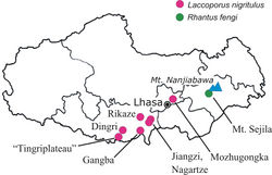 Figure 16. Xizang Autonomous Region, collecting localities of Rhantus fengi and Laccoporus nigritulus and notable geographic localities for orientation. Dingri = Te-ring (type locality of Laccoporus nigritulus); Gangba = Gompa; Jiangzi = Gyangtse (type locality of Laccoporus viator).